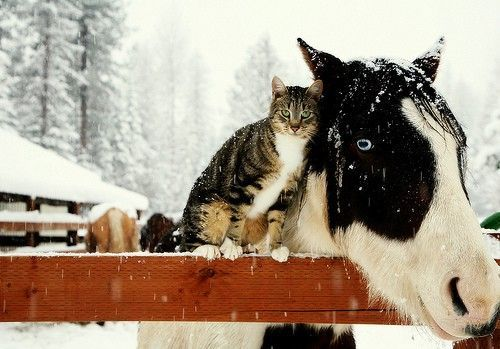 cat and horse: Animal Pictures, Except, Animal Baby, Best Friends, Snow Pictures, Baby Animal, Animal Friends, Cutest Animal, Baby Cat