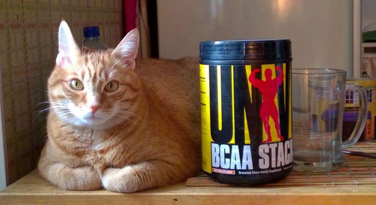 Кот и бодибилдинг. Вообще-то в банке содержится корм для кота. Просто удобно хранить и высыпать в миску.