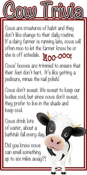 25+ best ideas about Cow facts on Pinterest | Animated cow, Facts ...