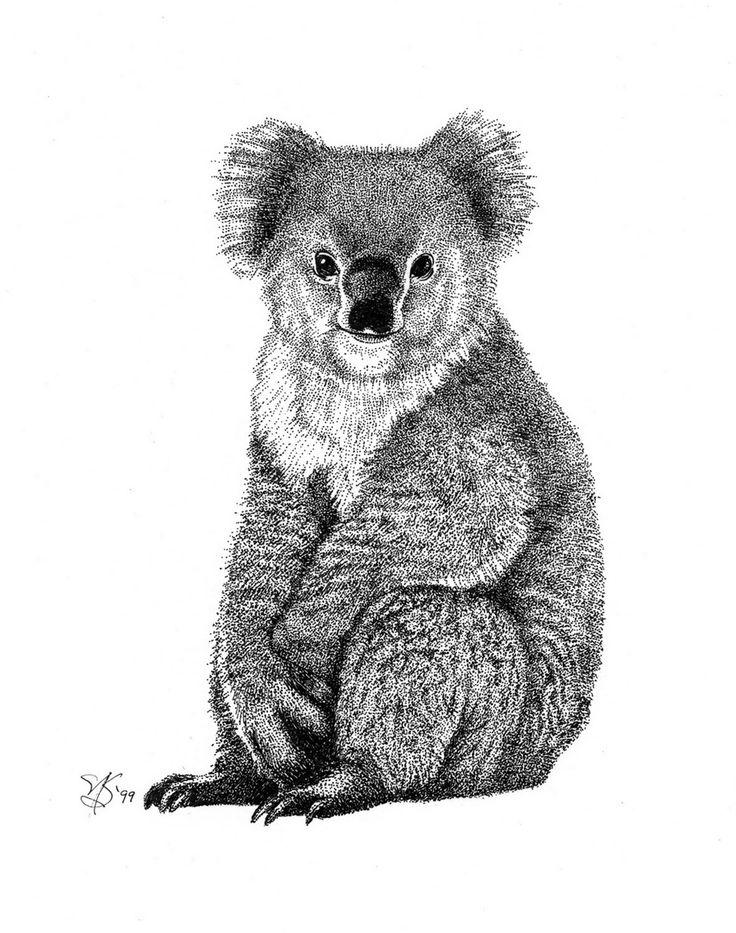 Koala illustration inspiration
