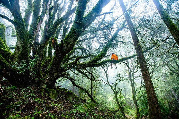 Forestales, Árboles, Hombre, Aventura, Naturaleza