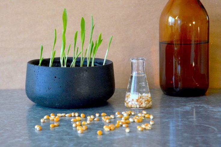 Popcornin jyvistä - Minttua ja mustikoita