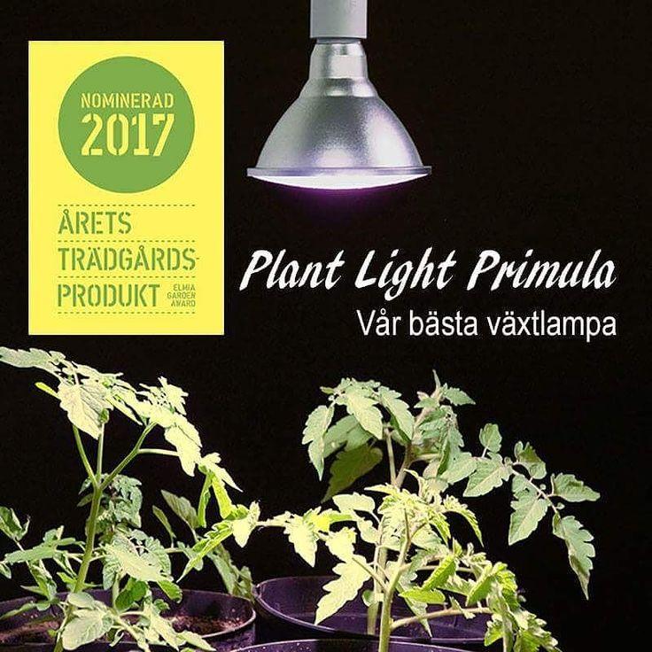 Sååå himla kul med nomineringen. Bara älskar våra nya lampor.  Både snygga och med toppenljus!