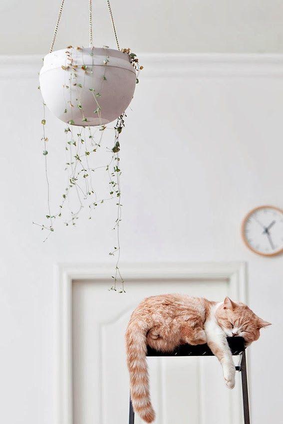 DECO: Ter cães e gatos dentro de casa