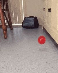 21 Best GIFs Of All Time Of The Week #154 from best GOAT and Best of the Web
