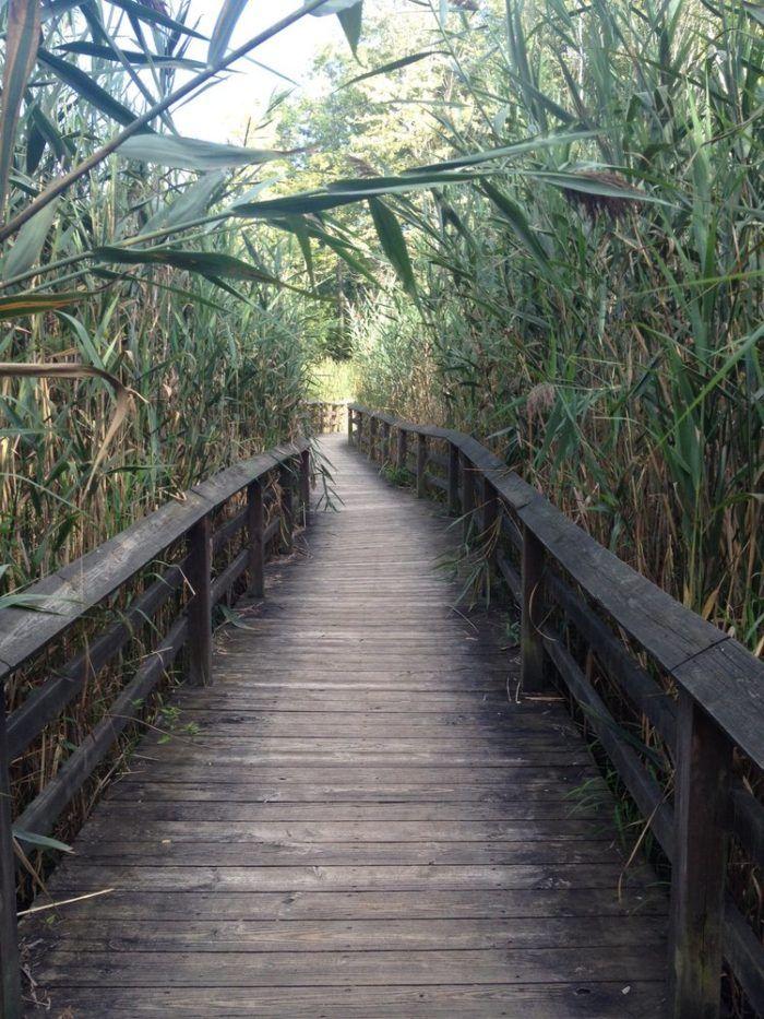 A hidden treasure of Monroe County, inside Tinker Nature Park you'll find a magical fair trail!