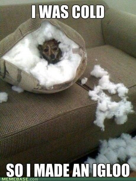Doggy Igloo. :) I am suprised Raven didn't do this to our couch! doggie toys never lasted more that an hour with her!  MISS YOU RAVEN!