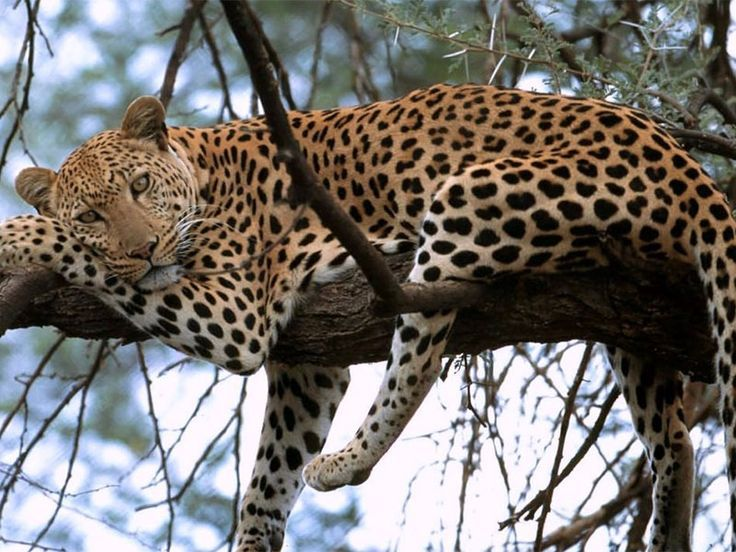 Safari Service Will Be Launched To Promote The Rich Forests Of Srinagar  >>>  There is good news for the wildlife lovers as Safari will soon be launched in #Jammu and Kashmir. Yes, you read that right, to promote the abandon forests of Jammu and #Kashmir, #safari services will be introduced in the city forest areas.