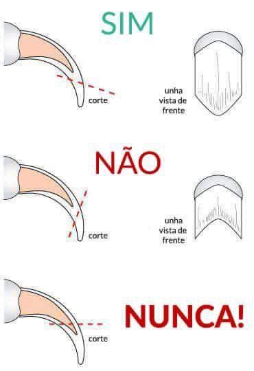 Como cortar as unhas do seu felino