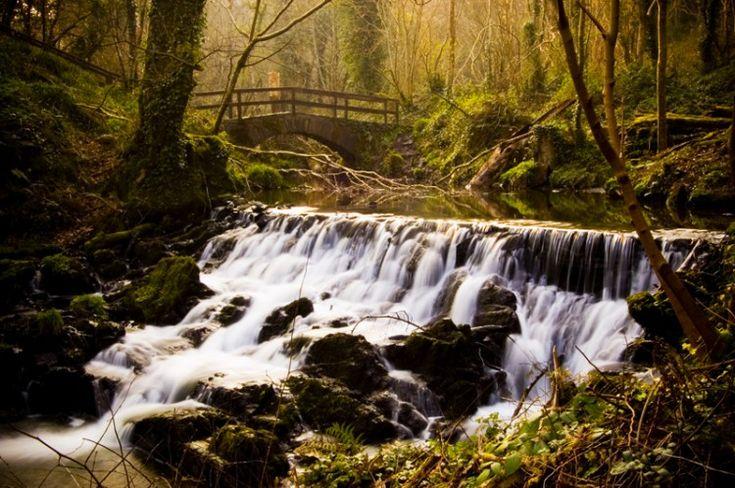 corsi d'acqua di campagna - Cerca con Google