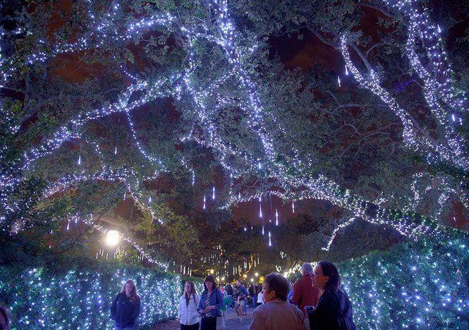 The Oaks In City Park New Orleans Celebration In The Oaks City  - New Orleans Christmas Lights