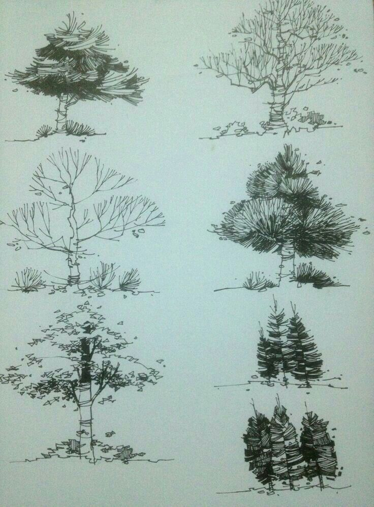 landscape architecture landscape sketch landscape drawings drawing trees plant sketches tree sketches sketching perspective drawings - Architecture Drawing Of Trees