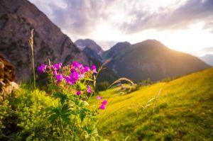 Yoga Retreats in Transylvania