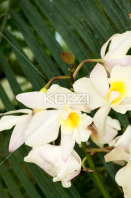 white flowers. - Close-up image of white flowers.