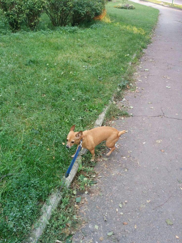 http://4sq.com/1dsLZSvI'm at выгул собак!