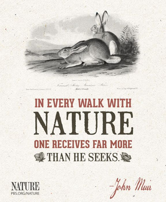 "Famous Wildlife Conservation Quotes: ""In Every Walk With Nature One Receives Far More Than He"