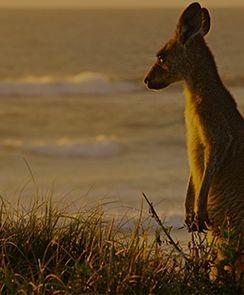 Kangaroo Island Overnight - 2 Day Cruise(Min 2 persons)-Adelaide, Australia INR 28216.0 Duraion:  2 days / 1 night Activity Details: Explore Kangaroo Island, a unique place with dramatic pockets of unspoiled wilderness.
