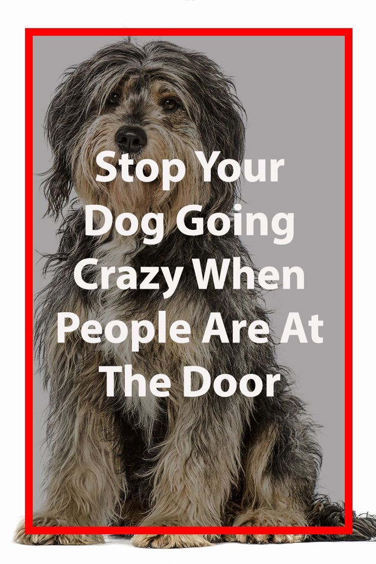 Stop Your Dog Barking At The Door Bell Dog Training Easiest