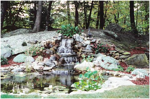 Water gardens will compliment any setting gardening for Setting up a garden pond