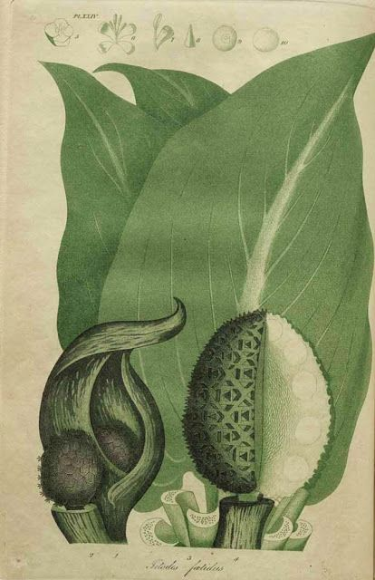 Early American Gardens: Early Garden Book - Jacob Bigelow. American Medical Botany. Boston, 1817.