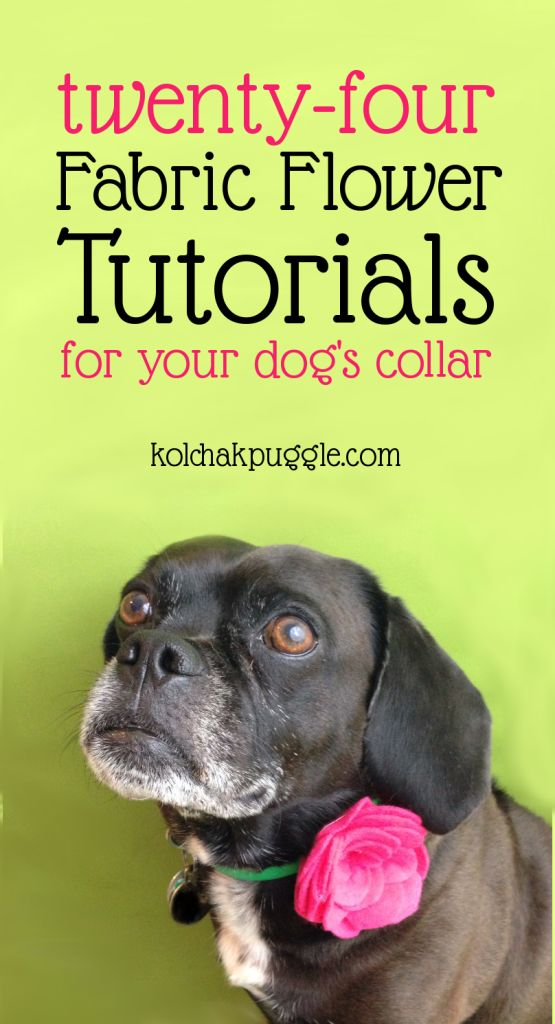 DIY Dog Collar Flower Tutorial