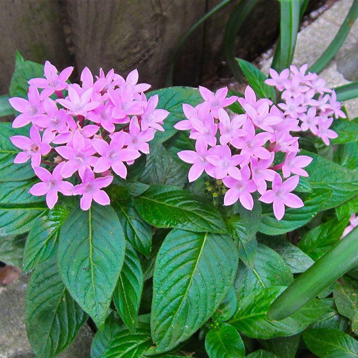 32 Best Gulf Coast Gardening Images On Pinterest