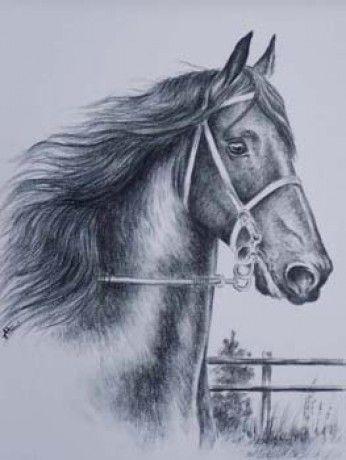 kone kreslene - Hľadať Googlom