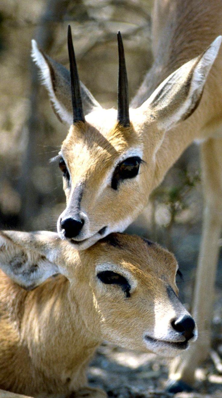 Source :beautiful wildlife nature