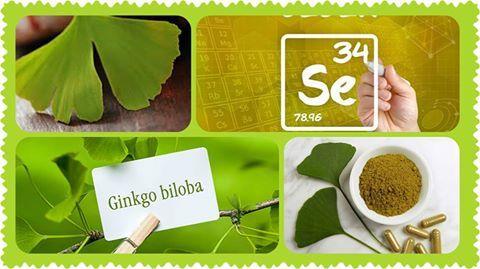 Ginkgo Biloba + Selenio - Páfrányfenyő kivonatot és szelént tartalmazó mikrokapszula!  A ginkgo biloba javítja az agy vér- és oxigénellátását, így idős korban az agyi érelmeszesedés folyamatát lassítja. http://www.szeretematestem.hu/ginkgo_biloba_selenio_-_pafranyfenyo_kivonat_es_szelen_tartalmu_mikrokapszula_741