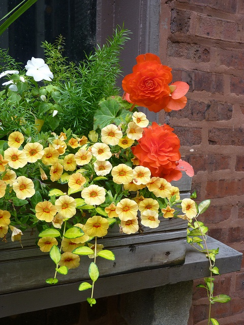 Window box with Pretty orange, yellow and white flowers.