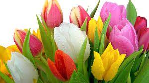 квіти - Пошук Google