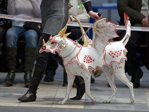 25 Crazy Pet Costumes That Put Yours to Shame