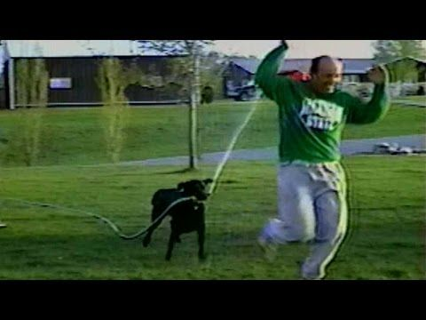 This hilarious Black Lab steals the hose from his owner and chases him down!