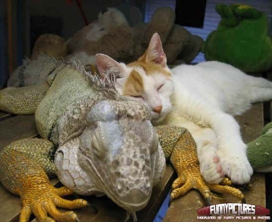Best friends sleepin baby mama - 5 9