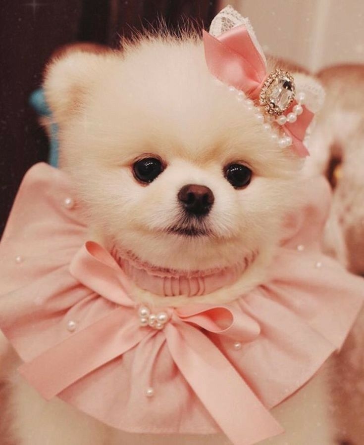 Cute Puppy Dogloverstagram Dogcute Loverdog Cute Dog Wallpaper Cute Baby Animals Cute Puppies