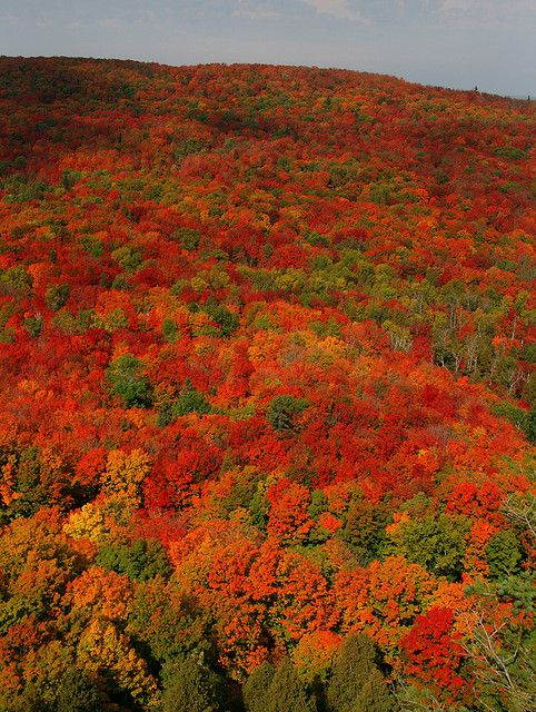 Northern Minnesota, come fall time, is right pretty. Sawtooth Mountains, Outside Lutsen, Minnesota.