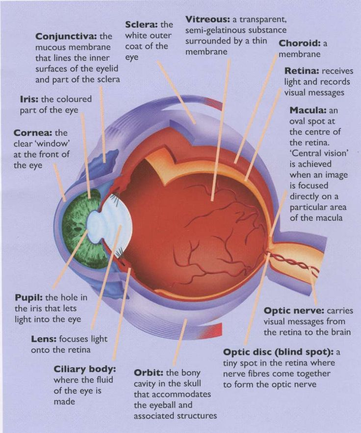 eye+structure+ | The anatomy of the eye
