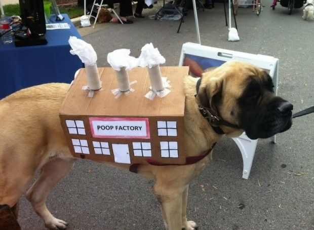 Fun Crazy Dog Halloween Costumes - Snappy Pixels & The 55 best Halloween Dog Costumes images on Pinterest | Halloween ...