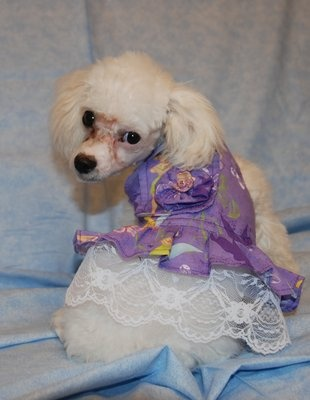 Doggy Duds-dog clothes for all occasions