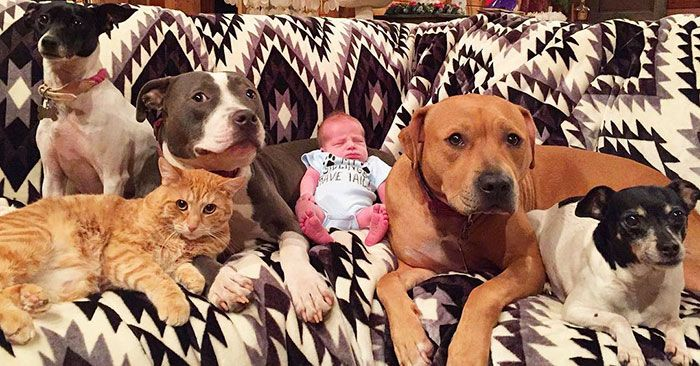 pets-family-friend-newborn-baby-sonny-2