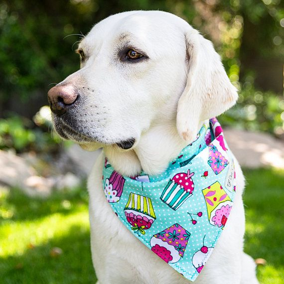 Cupcake Dog Bandana Birthday Dog Bandana Cupcake Tie-On Dog