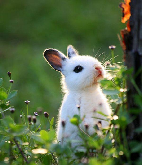 bunny animals rabbit
