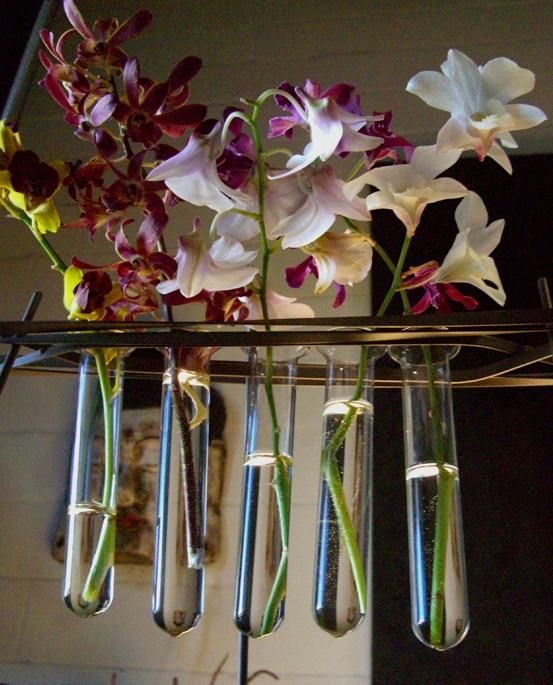33 best images about test tube on pinterest industrial for Test tube flower vase rack