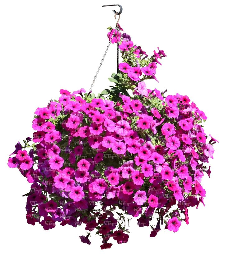 A Hanging Basket With Pink Flowers Cut Out Plants
