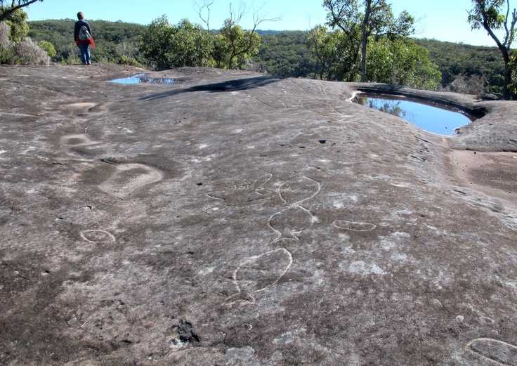 Aboriginal rock engravings site, Sydney. This shows you what a good site looks like.  This one is within a country kilometre of Oxford Falls: given the stupid vandalism that happens on these sites, most of us are a little careful about broadcasting the whereabouts of the sites,  We share with like-minded, trustworthy people.