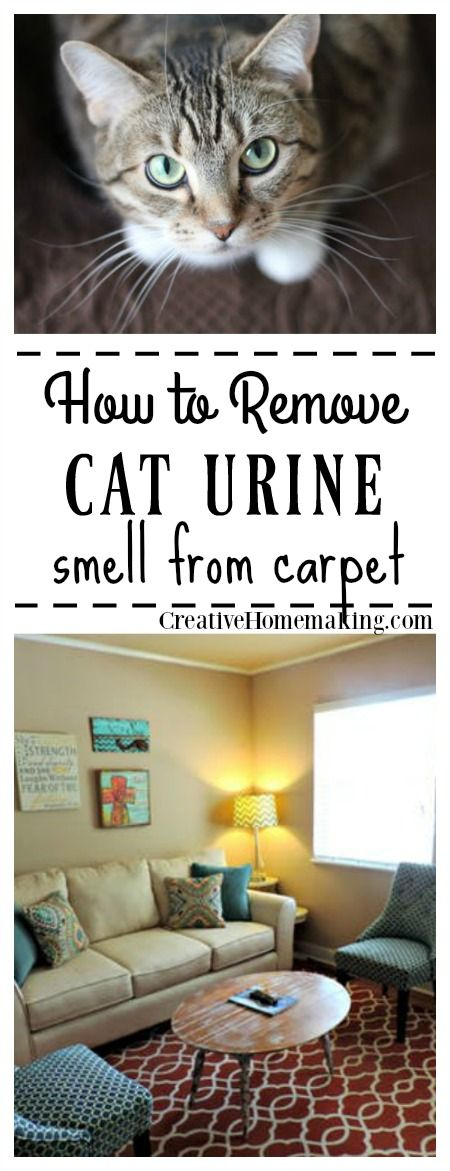 How to remove cat urine smell from carpet.