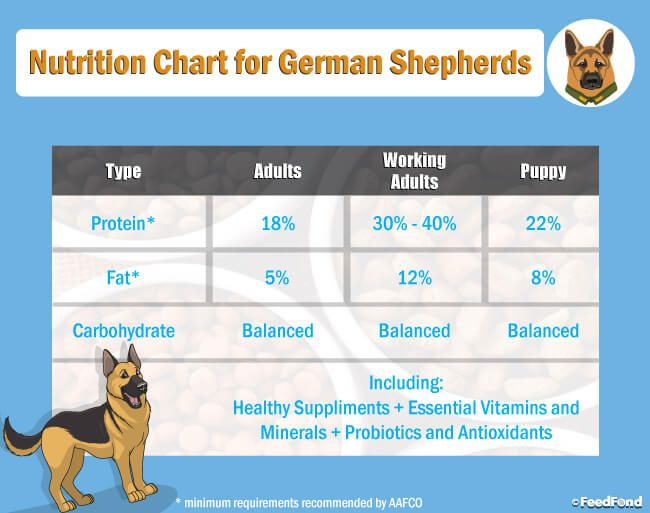 20 Best Dog Foods For German Shepherd Gs Puppies In 2020 Best