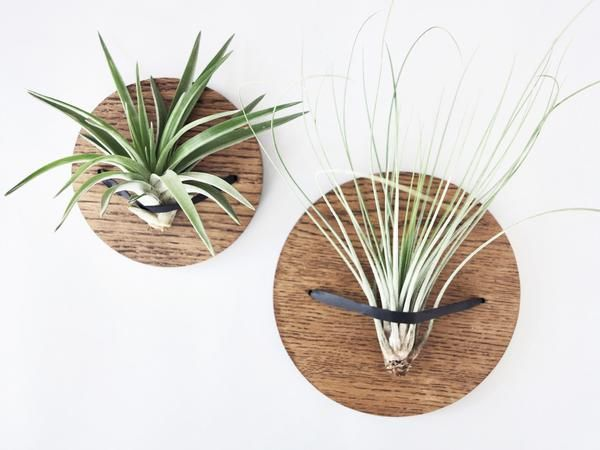 Wooden wall hanger airplant holder solid oak leather strap