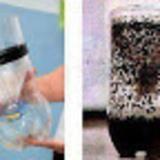 Μωσαϊκό: Εξοντώστε τα ενοχλητικά κουνούπια με φυσικό τρόπο