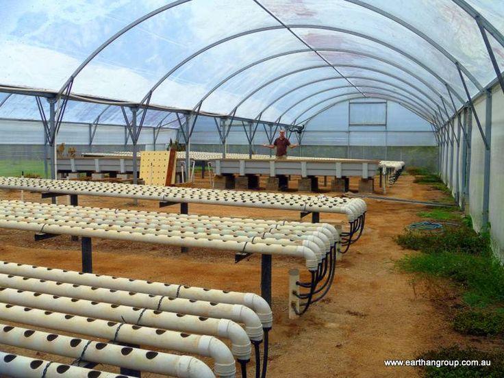 Aquaponics For Profit The Real Cost Earthan Group Pty Ltd Aquaponics Pinterest